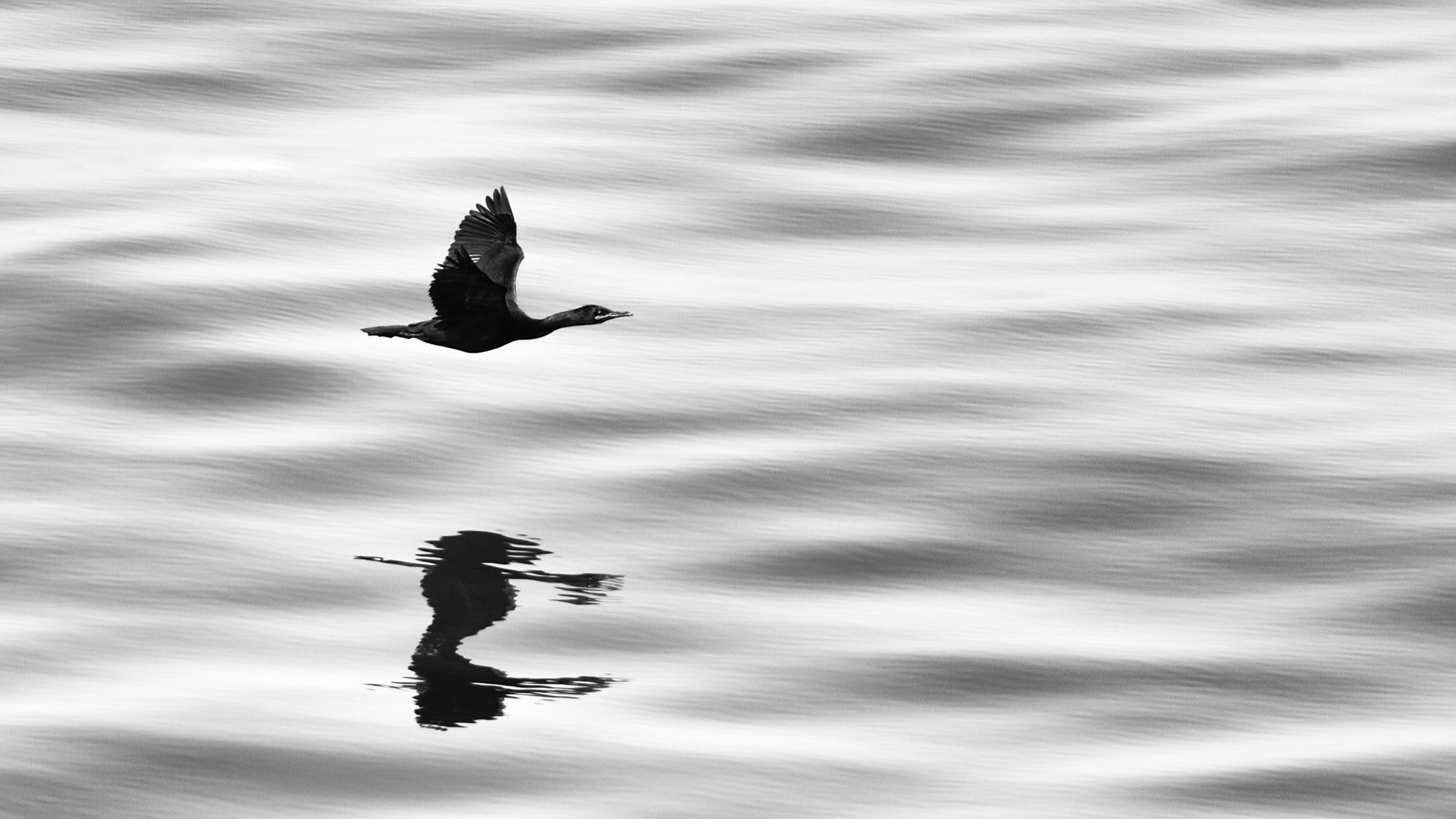 Photographie de mer Cormoran
