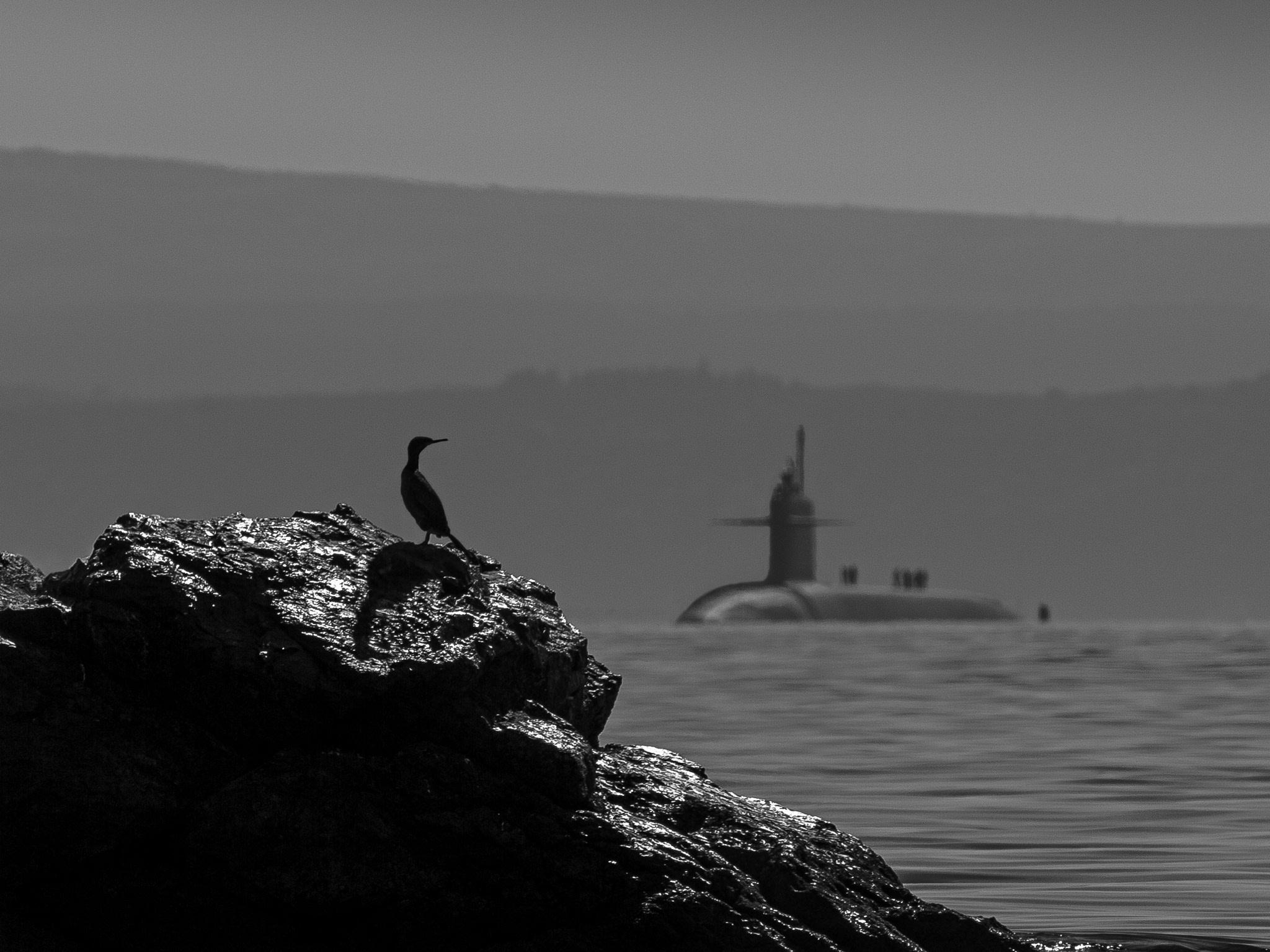 Photographie sous-marin D4S4044