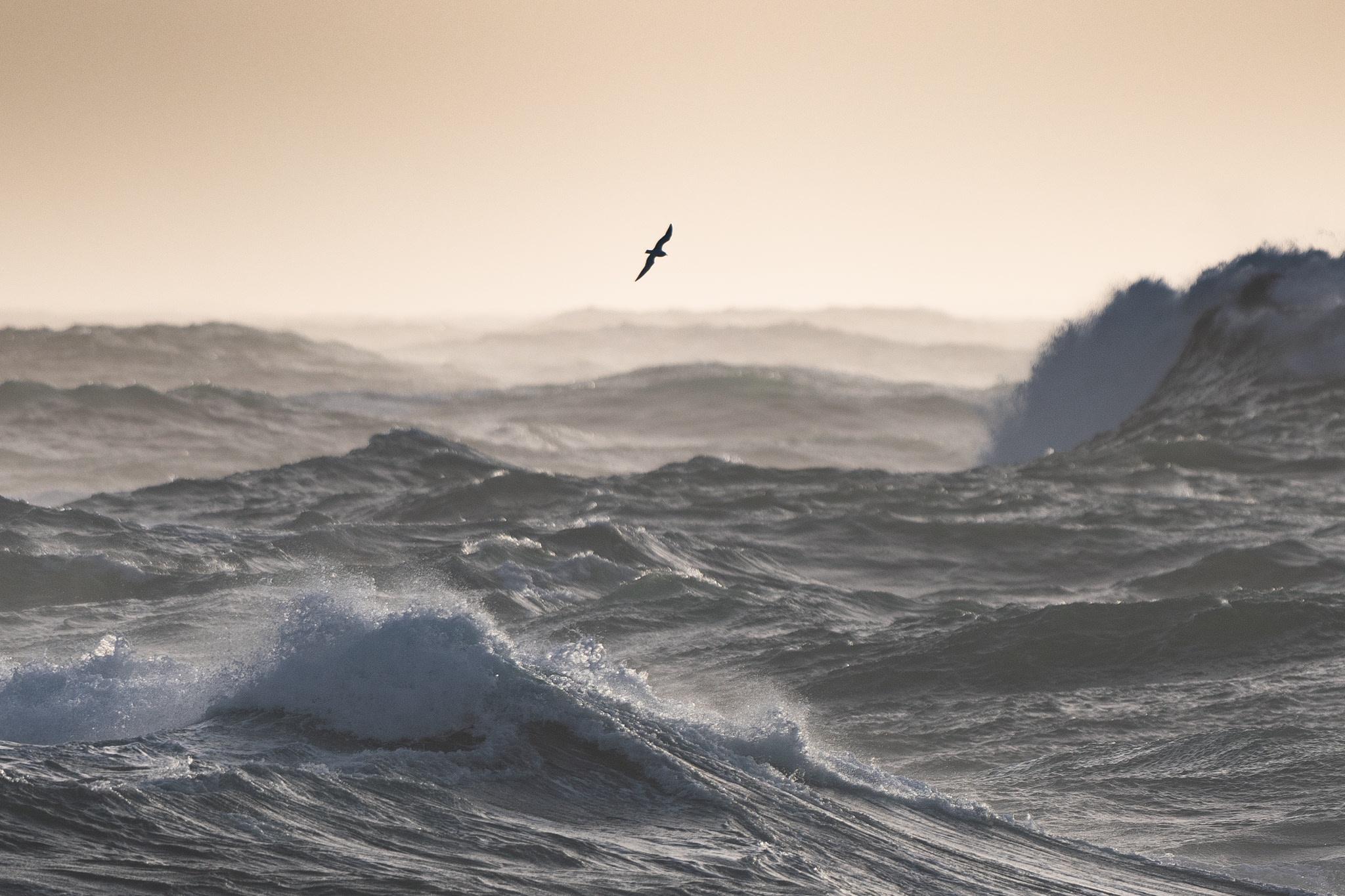 Photographie de mer DSC5394